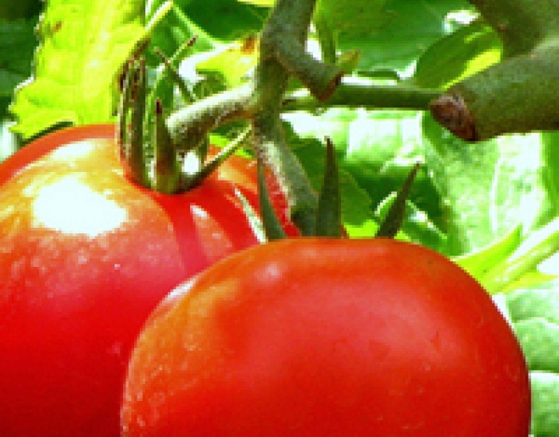 زراعت و اصلاح نباتات